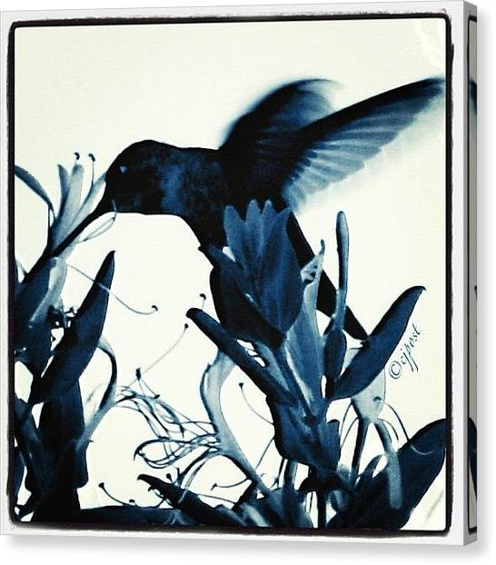 Hummingbirds Canvas Print - Hovering Hummingbird #inmybackyard by Cynthia Post