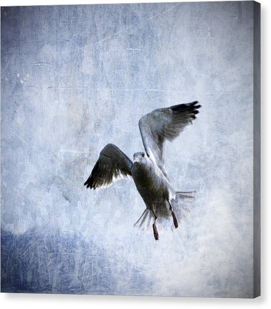 Seagull Canvas Print - Hovering Seagull by Carol Leigh