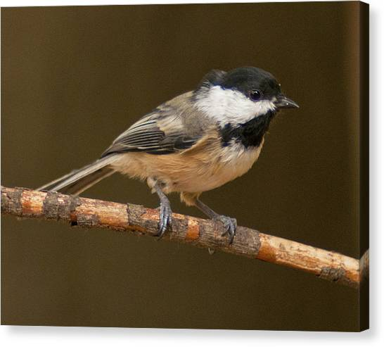 How Is This Pose Canvas Print by Don Wolf