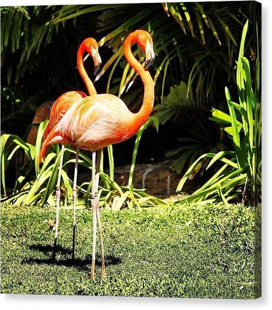 Flamingos Canvas Print - Http://instacanv.as/ilana182 Please by Lana Houlihan