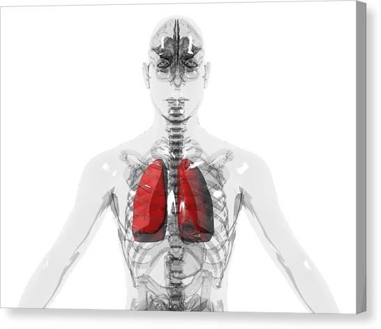 Human Lungs Canvas Print by Christian Darkin