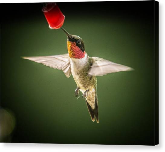 Hummers In The Garden Four Canvas Print by Michael Putnam