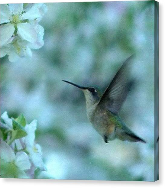 Apple Tree Canvas Print - Humming Bird Swarm | #instagram by Tony Macasaet