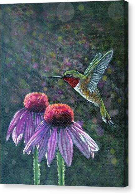 Hummingbird And Cone Flowers Canvas Print by Diana Shively
