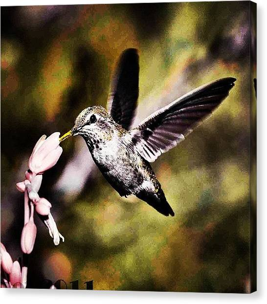 Hummingbirds Canvas Print - #hummingbird #feathers #birds #scenery by Artistic Shutter
