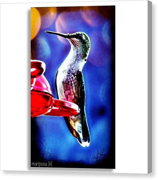 Edit Canvas Print - Hummingbird by Mari Posa