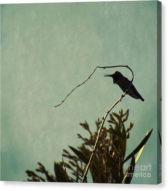 Hummingbird On Winter Wisteria Canvas Print