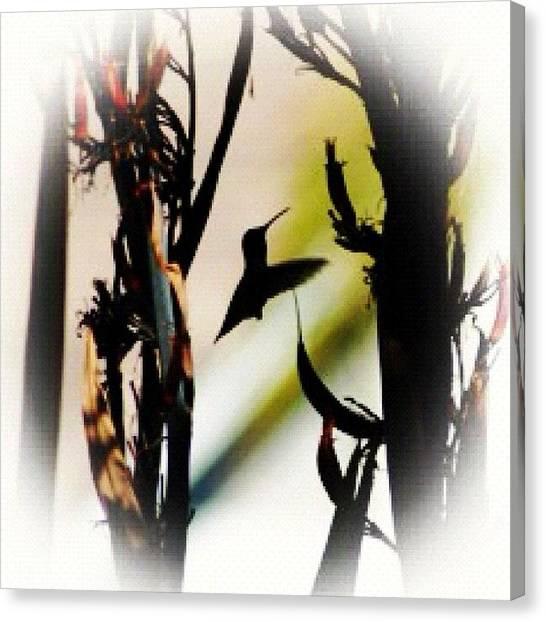 Hummingbirds Canvas Print - Hummingbird Silhouette.... I Did A by Vicki Damato