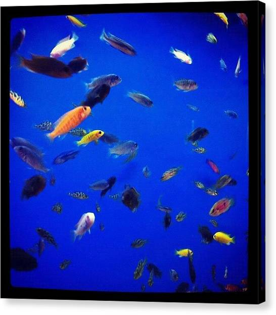 Tanks Canvas Print - Hundreds Of Tiny Fish by Kristina Parker