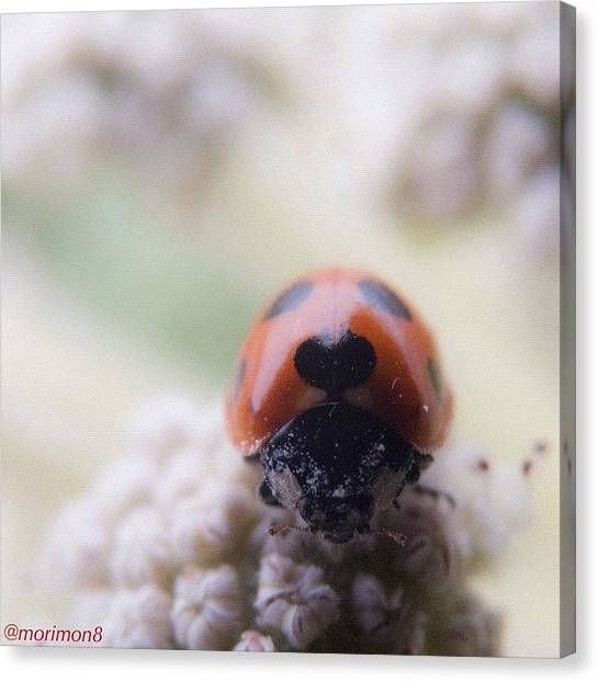 Ladybugs Canvas Print - Hungry by Morley🇯🇵♂ もーりー∞♂