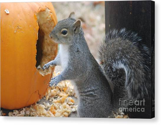 Hungry Squirrel Canvas Print