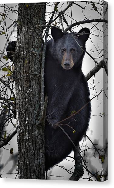 Hunting Berries Canvas Print