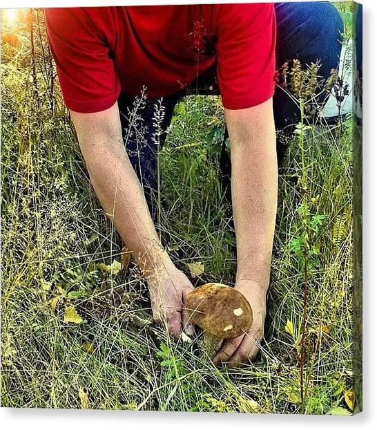 Hunting Canvas Print - Hunting #hunting #mushroom #hunt #rays by Grigorii Arzhanykh