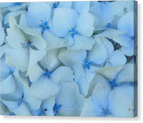 Hydrangeas Hortensias Canvas Print