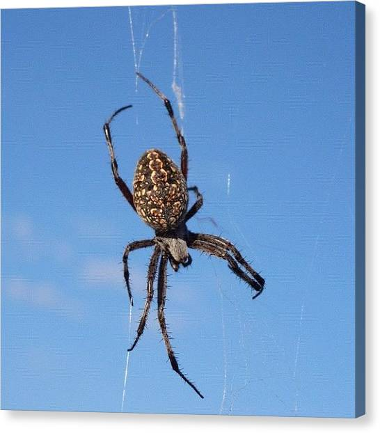 Spider Web Canvas Print - I About Walked Right Through This by Jennifer OHarra