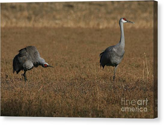 I Believe You've Lost A Landing Gear Canvas Print by Clare VanderVeen