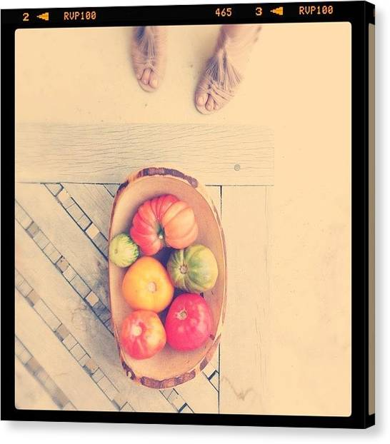 Tomato Canvas Print - I Could Never Tire Of Your Beauty by Kim Hudson