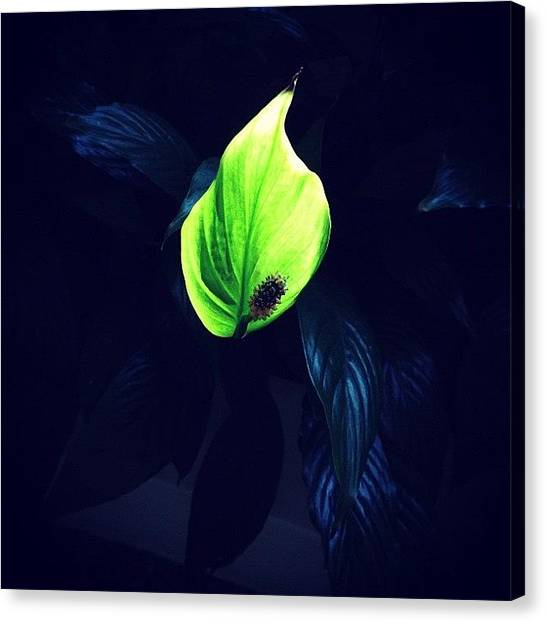Limes Canvas Print - I Couldn't Resist A Second Shot! by Luiz Di Bella