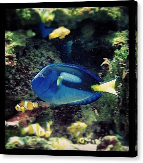 Underwater Canvas Print - I Found Nemo & Dolly!! 🐠🐟🐬🐳 by Marce HH