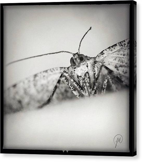 Georgia Canvas Print - I Just Found Out That It's Moth Week! by Jenna Malloway
