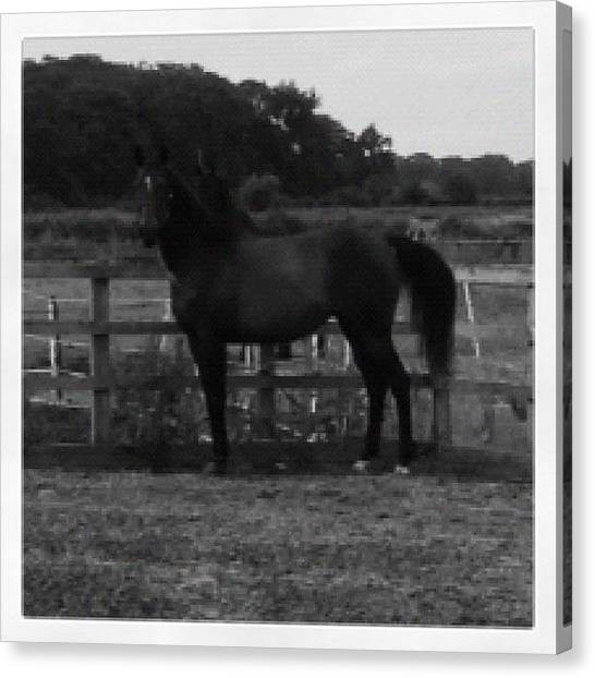 Thoroughbreds Canvas Print - I Know It's Not The Best But I Still by Caitlin Hay