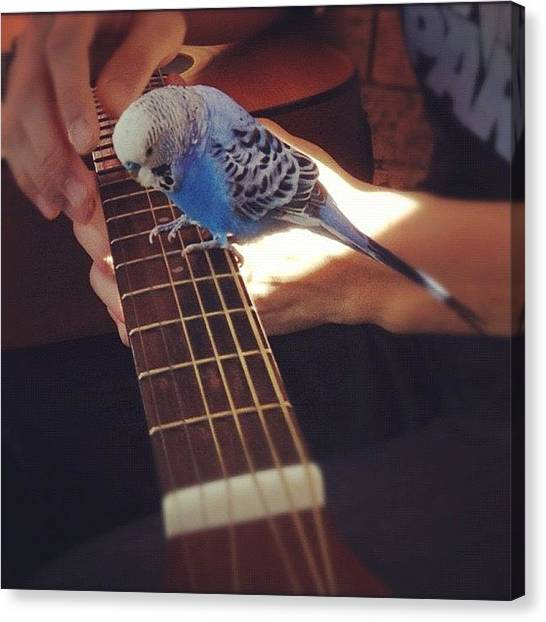 Tropical Birds Canvas Print - i Like Guitars Too! Tako ^^ by Vincy S