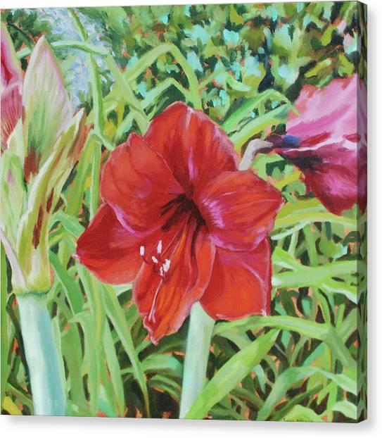 I Love Amaryllis Canvas Print