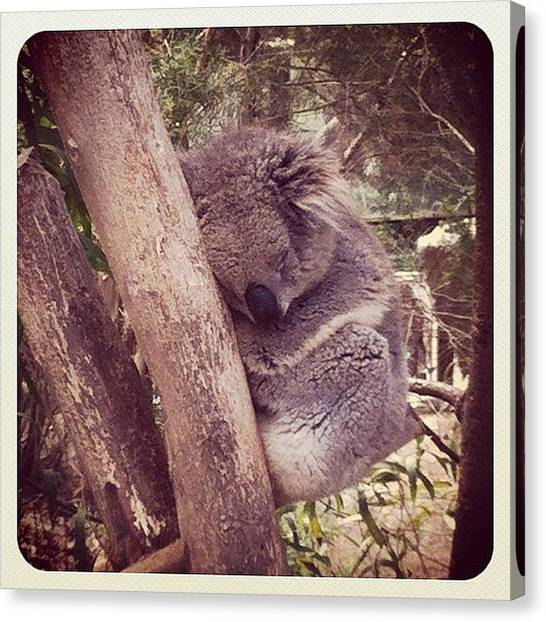Koala Canvas Print - I Love How Flat Out Koalas Are by Lana Houlihan