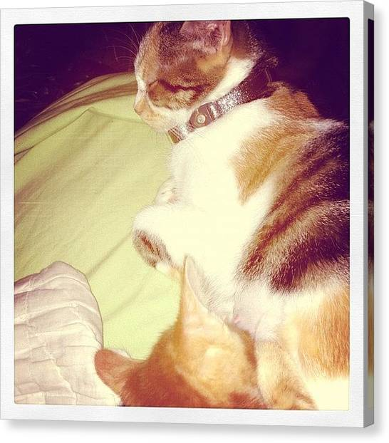 Pumpkins Canvas Print - I Love My Baby Girl, #pumpkin #meow by Latham Sarah