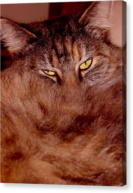 Manx Cats Canvas Print - I Love My Fur by Kathleen Horner