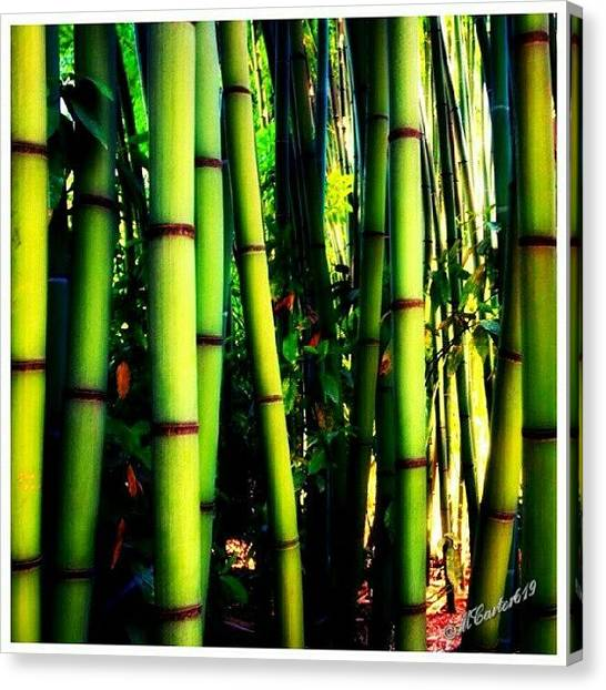 Bamboo Canvas Print - I Never Knew Bamboo Could Grow So Tall by Mary Carter