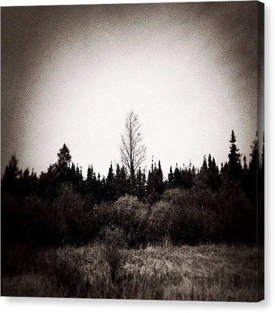 Manitoba Canvas Print - I Stand Alone by Jessica Mutimer
