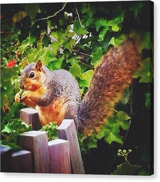 Squirrels Canvas Print - I Swear This Little Guy Was Posing 😊 by Kristin Templeman