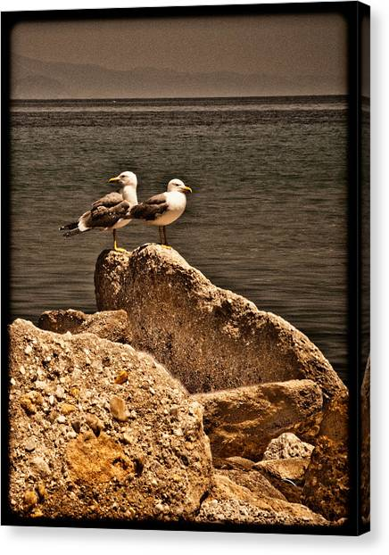 Afitos, Greece - I Think We're Alone ... Canvas Print