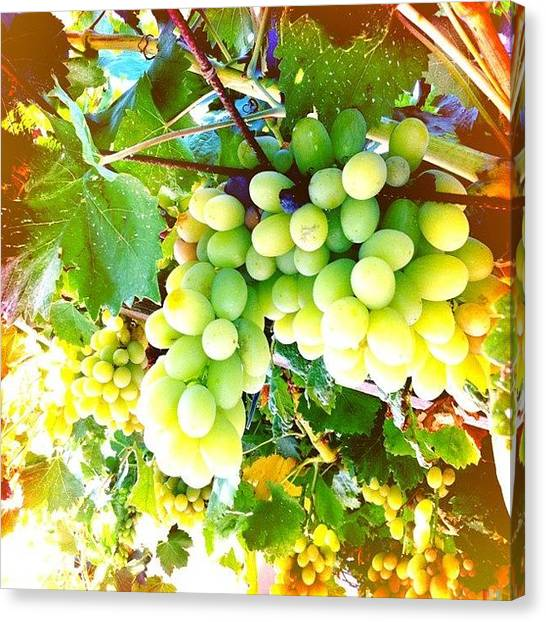 Grapes Canvas Print - I Ve Heard You Can Survive Only By by Cage 😱 Folles