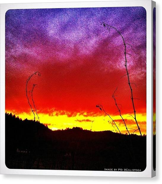 Vineyard Canvas Print - I Walked Across The Street Into The by Peter Stetson