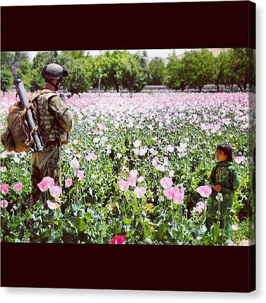 Gun Control Canvas Print - I Want To #visit The #afghani #poppy by Explore More