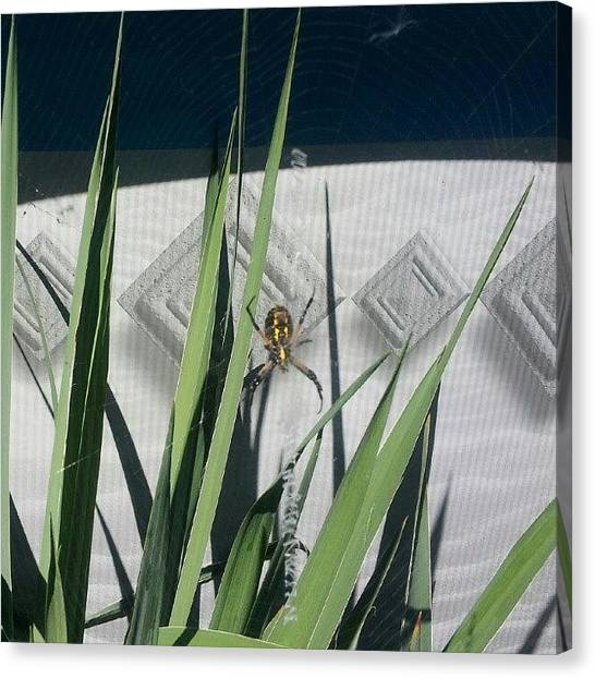 Spider Web Canvas Print - I Won't Hurt You If You Don't Hurt by Michelle Knapp