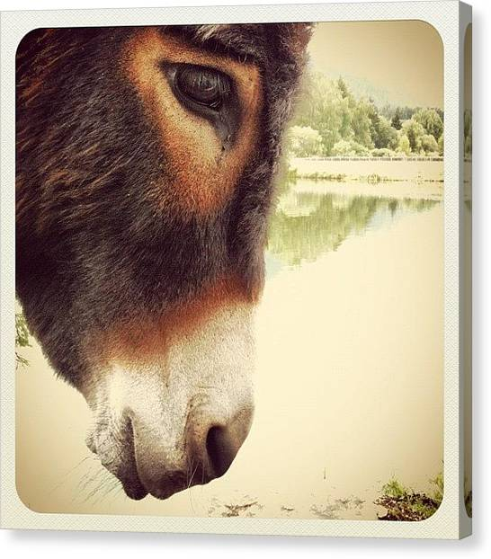 Donkeys Canvas Print - IA by Florian Divi