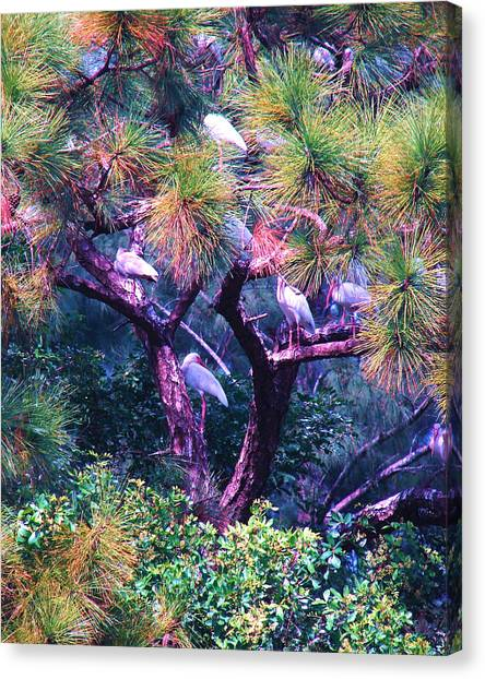 Ibis-gone To Roost Canvas Print
