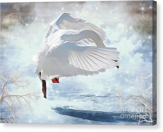 Swans Dance Of Spring Canvas Print