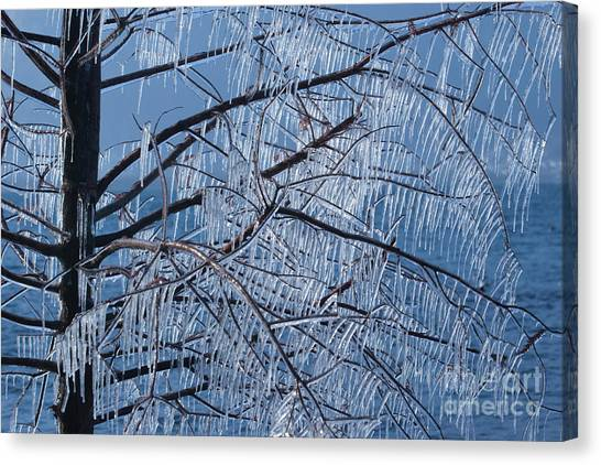 Icy Tree Canvas Print