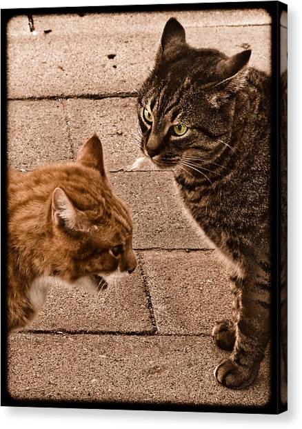Albuquerque, New Mexico - If Looks Could Kill Canvas Print