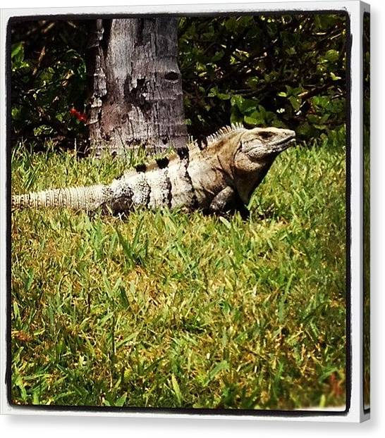 Iguanas Canvas Print - Iggy by Maria Bernal-Silva