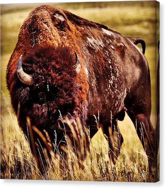 South Dakota Canvas Print - Igotmyeyeonyou by S Teske
