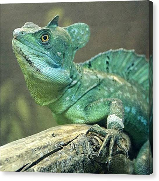 Iguanas Canvas Print - #iguana #lizard #zoo #wild #wildlife by Adriana Guimaraes