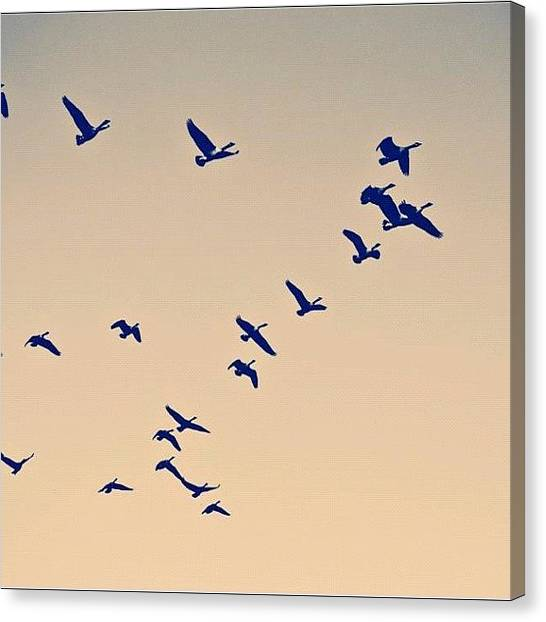 Manitoba Canvas Print - Ill Fly Away by Shannon Evans