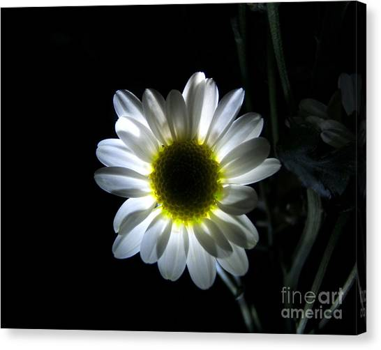 Illuminated Daisy Photograph Canvas Print