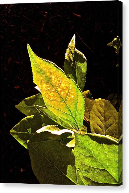 Illumined Canvas Print by Rotaunja