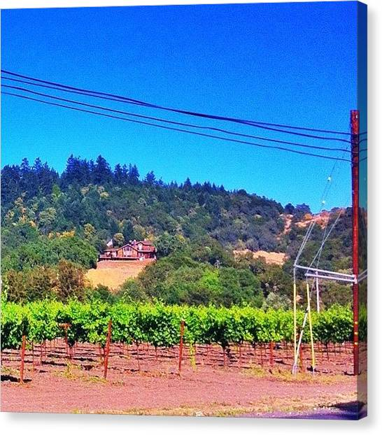 Vineyard Canvas Print - I'm Almost Home by Jp Bernaldo